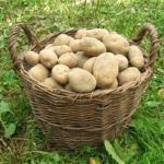 potatoes-501132_640